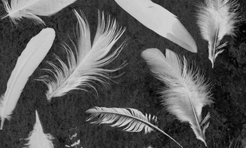 Photoshop(フォトショップ)羽毛ブラシ4
